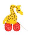 Trekdieren giraffeen