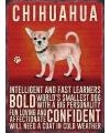 Wand decoratie Chihuahua